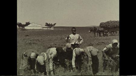 Αγροτική Ισπανία, 1925, συγκομιδή φακών